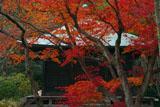 鎌倉浄光明寺 紅葉と不動堂