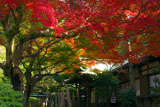 鎌倉宮 紅葉と社務所