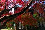 旧華頂宮邸 カエデの紅葉