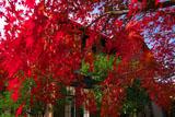 紅葉越しの旧華頂宮邸
