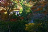 安国論寺 松葉ヶ谷の冬紅葉