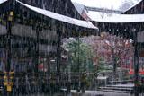 雪降る上賀茂神社