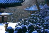 雪化粧した愛宕念仏寺