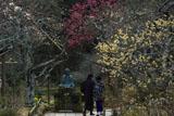 東慶寺 梅とカップル