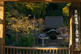円覚寺正統院のロウバイ