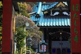 鎌倉常栄寺 山門越しの白梅