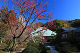 浄妙寺の紅梅