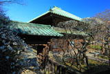 鎌倉英勝寺の梅と仏殿