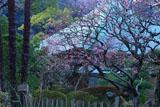 鎌倉光触寺 梅と本堂