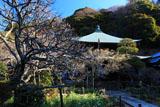 瑞泉寺 白梅と水仙に仏殿
