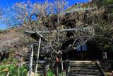 瑞泉寺 オウバイと仏殿
