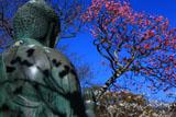 東慶寺 金仏と紅梅