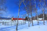 冬晴れの牧場