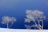 美幌峠の霧氷