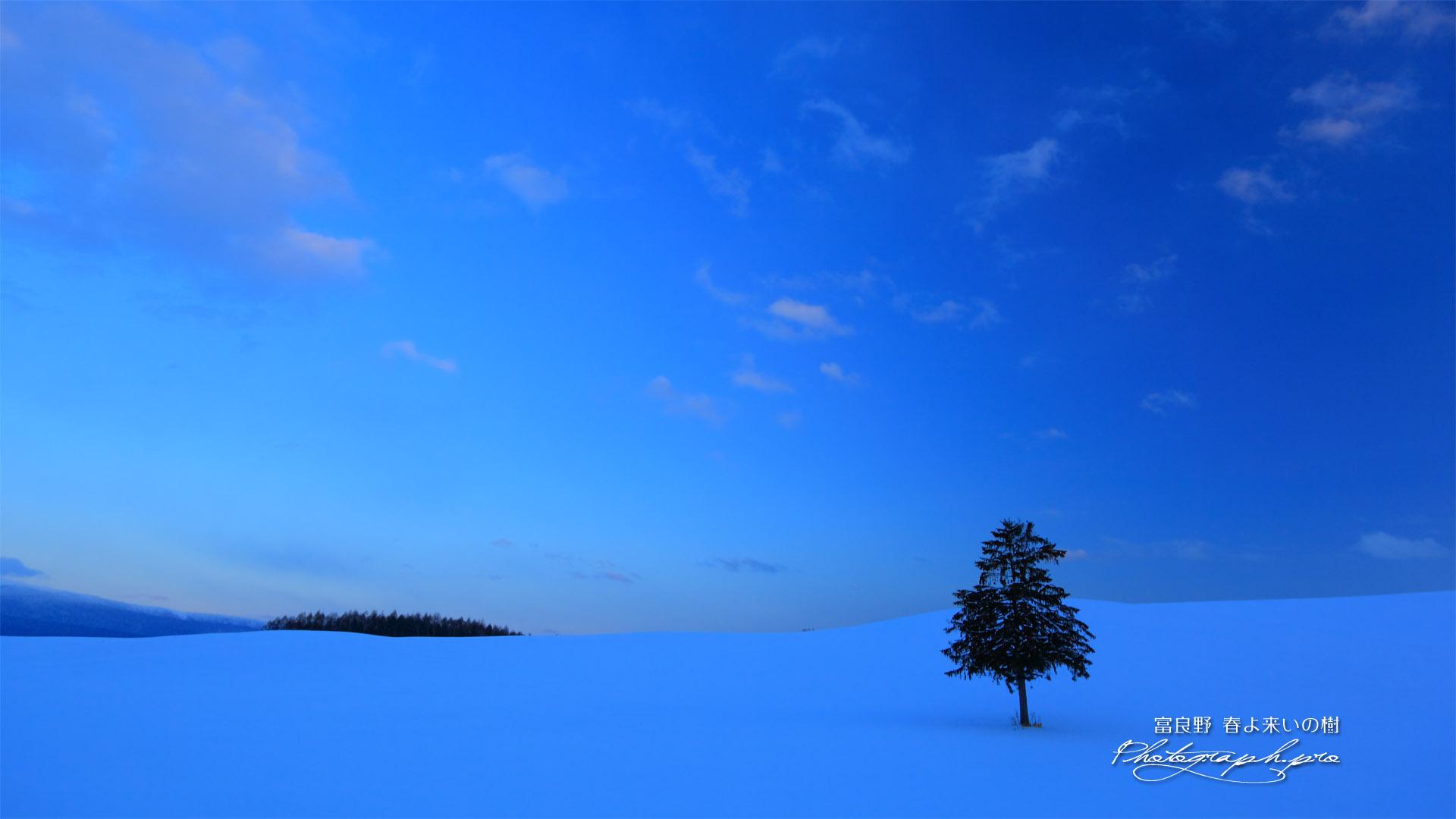 日没後の一本の樹 の壁紙 19x1080