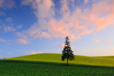 茜雲とクリスマスツリーの樹