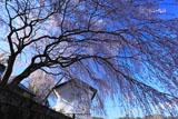 古庄家の枝垂れ桜