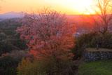 山桜と阿蘇山
