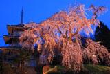 淨専寺三重塔とライトアップ