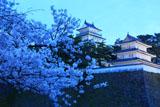 島原城の桜と天守閣