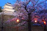 島原城の桜と西の櫓