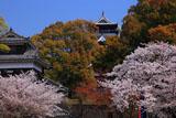 頬当御門からの熊本城の桜