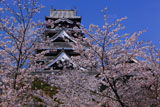 熊本城の桜 飯田丸からの天守閣