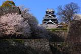 熊本城の桜 竹の丸からの天守閣