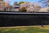 熊本城の桜 長塀と女の子