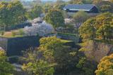 熊本城の桜 市役所からの数寄屋丸