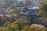 熊本城の桜 市役所からの飯田丸五階櫓