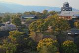 熊本城の桜 市役所からの天守閣