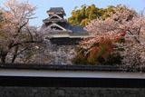 熊本城の桜 長塀と飯田丸五階櫓