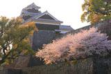 熊本城の桜 竹の丸からの飯田丸五階櫓