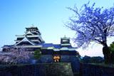 熊本城の桜 天守台東側からの大小天守