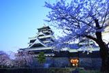 熊本城の桜 天守台東側からの天守閣
