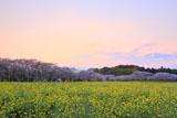 夕焼けの西都原公園