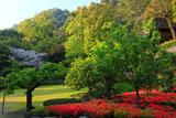 仙巌園のキリシマツツジ