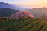 天空に咲く遠山桜
