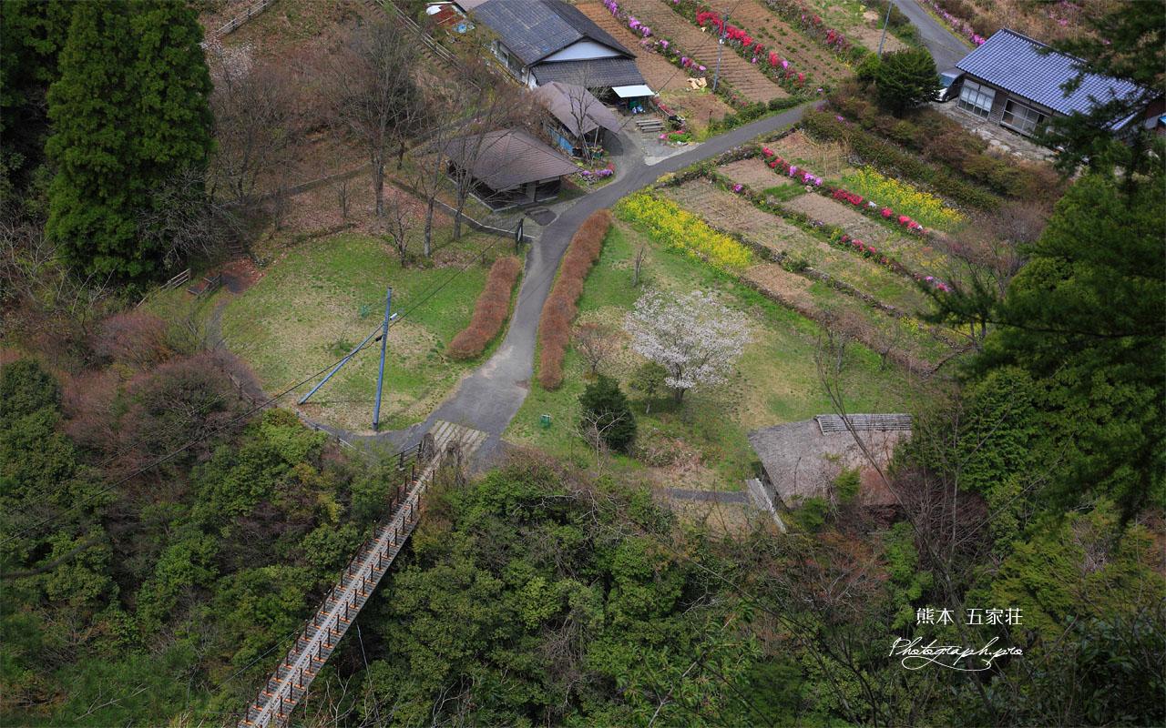 五家荘 樅木の吊橋 壁紙