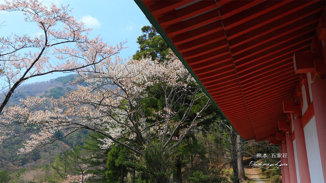 五家荘平家の里の山桜 壁紙