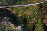 五家荘 梅の木轟公園吊橋