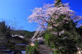黒川温泉の桜と旅館夢龍胆
