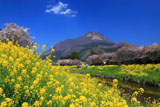 由布岳と由布院温泉の桜