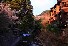 黒川温泉の桜