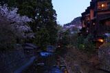 黒川温泉の山桜と旅館ふじ屋