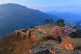 竹田城跡の桜 南二の丸の山桜