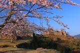 竹田城跡の桜 北翼の曲輪から天守