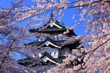 弘前城 桜と天守閣