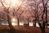 弘前城 夕陽耀く西濠